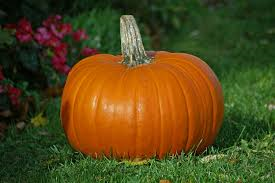 Growing your own Pumpkin