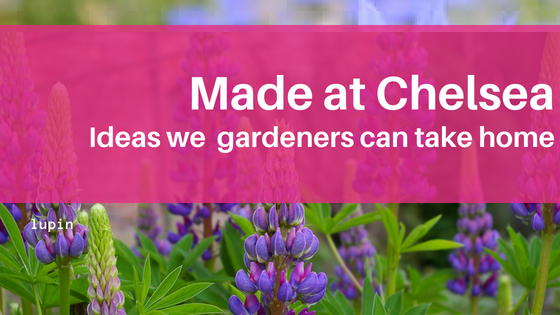 Ideas we can take from RHS Chelsea 2018