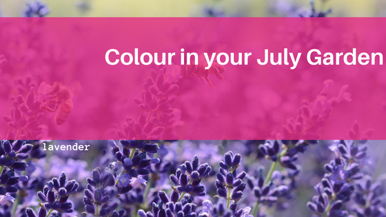 Colour for your July Garden